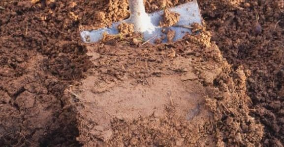 Improving Clay Soil With Composting Worms...