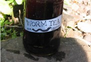 How To Make Worm Tea To Supercharge Your Garden & Plants...