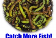 How To Make Live Composting Worms Neon Green & Drive Fish Crazy...