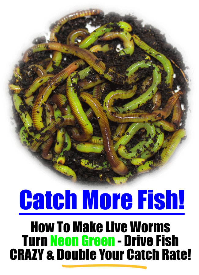 How to make live composting worms turn neon green to drive for Fishing worms for sale